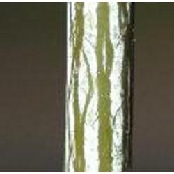Acer x conspicuum 'Elephant's Ear' - bark