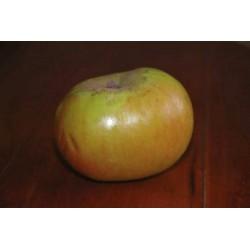 Malus 'Bramleys Seedling' - Apple