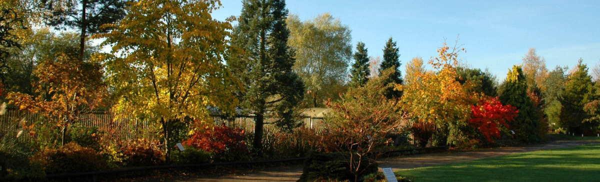 Autumn colour bluebell arboretum and nursery